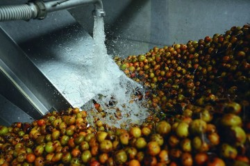 Avant d'être pressées les poires à poiré sont lavées (c)Joël Morin