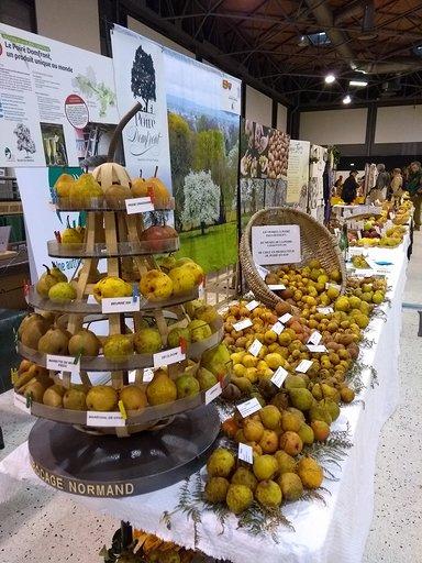 25 variétés de poires à poiré du Domfrontais exposées